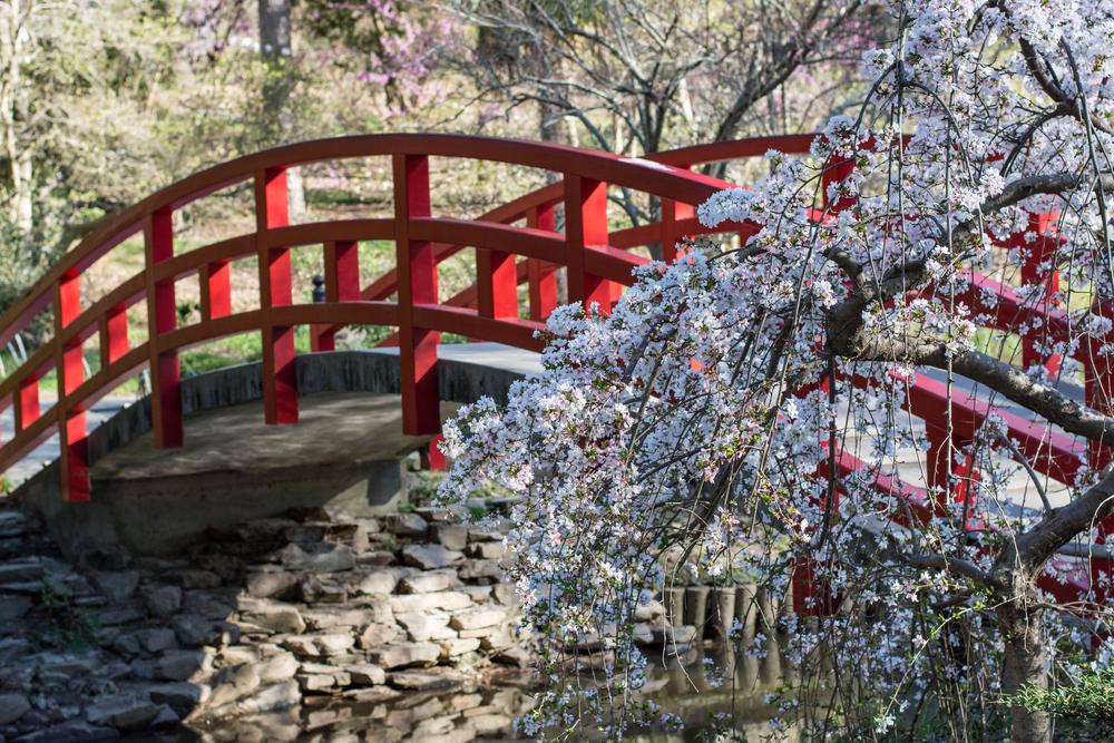 Duke-Gardens-spring-flowers